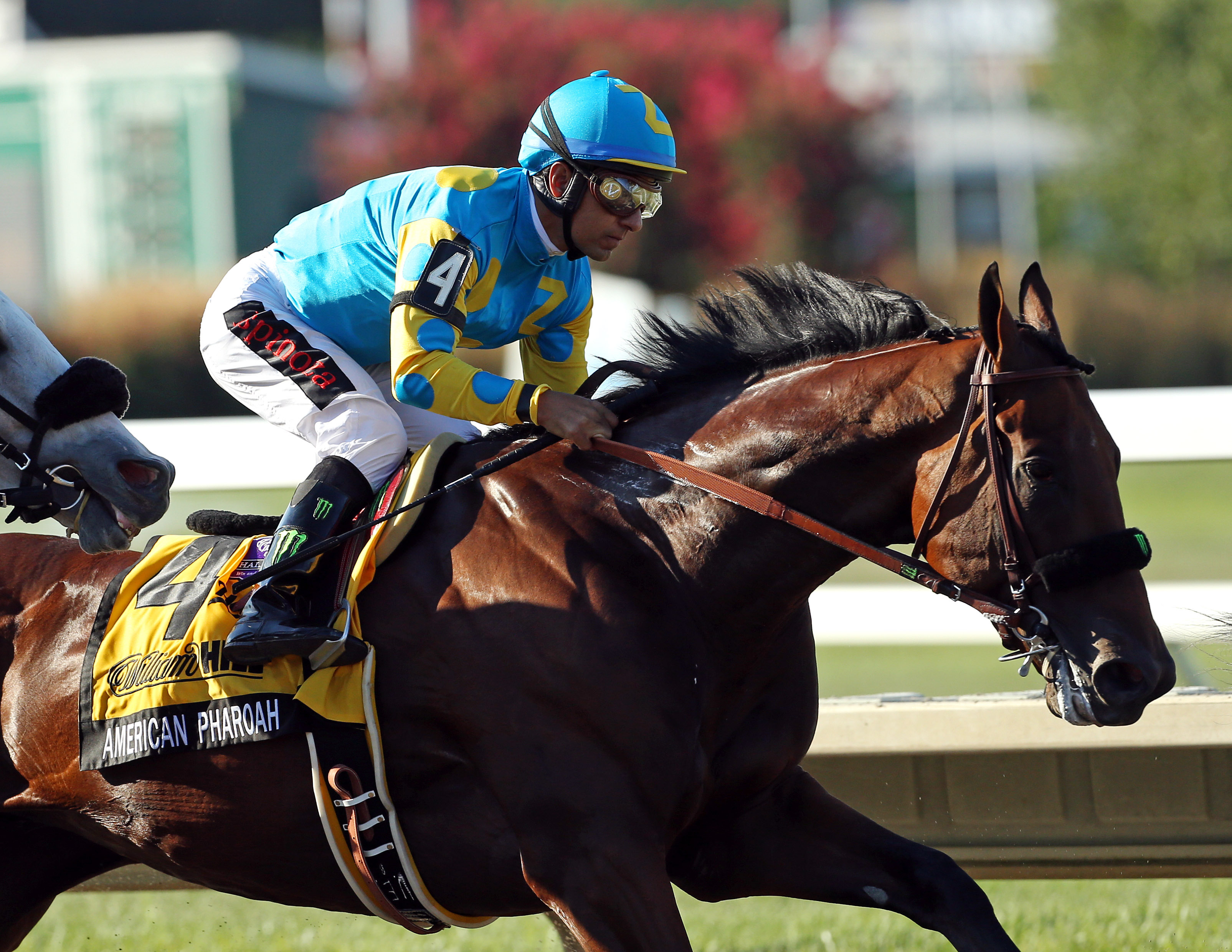 American Pharoah, who won the Triple Crown earlier this year, made the Forward 50 in November. (Photo by Adam Hunger/Getty Images)