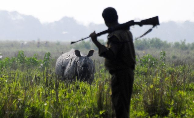 An Indian forest official takes part in counting the Indian one horned rhinoceros during a population census at the Pobitora Wild Life Sanctuary about 50 km from Guwahati, India?s northeastern Assam state, on May 08, 2009. According to the 2009 census, 84 rhinos are found in the sanctuary compared to 81 rhinos in 2006. AFP PHOTO/Biju Boro (Photo credit should read BIJU BORO/AFP/Getty Images)