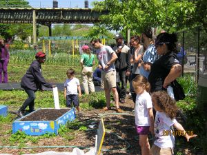 Families tend to plots at East New York Farms. (PHOTO: ENYF! staff)