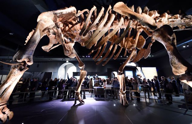 The Titanosaur, the largest dinosaur ever displayed at the American Museum of Natural History, is unveiled at a news conference January 14, 2016 in New York. The dinosaur was discovered in 2014, in Argentinas Patagonia region. / AFP / DON EMMERT (Photo credit should read DON EMMERT/AFP/Getty Images)