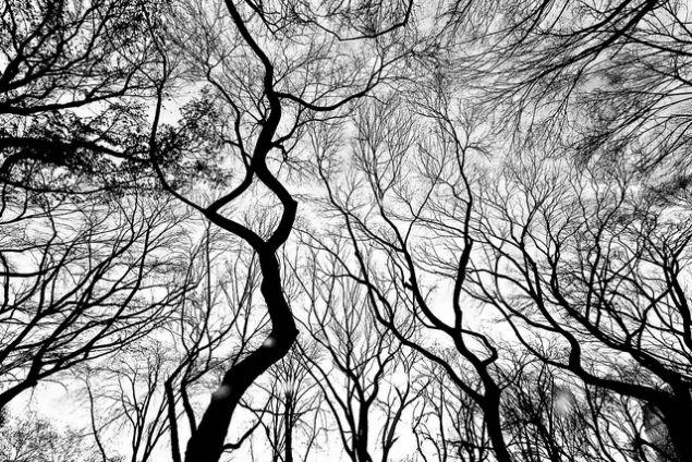 Thomas Hawk/flickr.