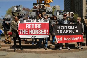 Protestors support the mayor's efforts to remove horses from New York streets last spring. (Photo Spencer Platt/Getty Images)