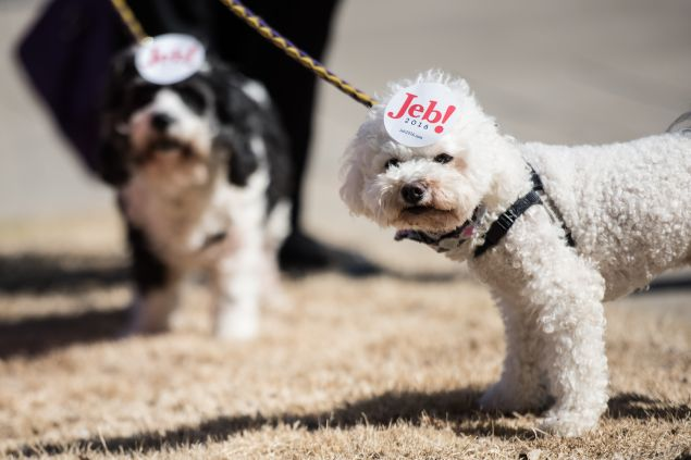 Dogs show their owner's support for Republican presidential candidate Jeb Bush following a campaign event February 19, 2016 in Greenville, South Carolina. The South Carolina Republican primary will be held Saturday, February 20.