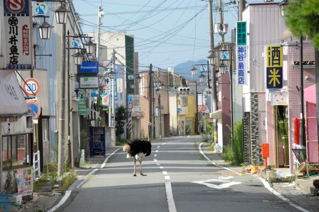 Ōta Yasusuke (b. 1958) Deserted Town from the series The Abandoned Animals of Fukushima, 2011 Photograph, pigment-based inkjet print.