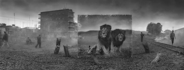 Nick Brandt, Railway Line With Lion Brothers, 2015.