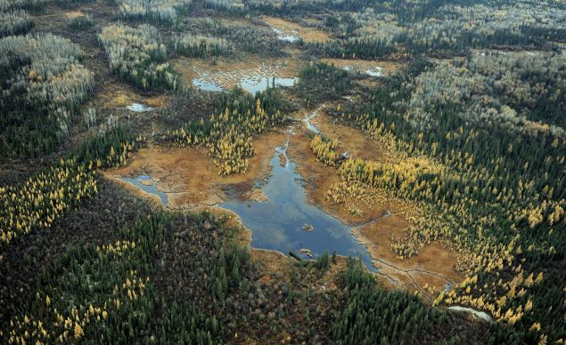 A lake in the boreal forest in northern Alberta.