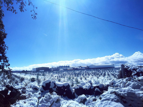 The biggest surprise was the snow. While it was 70 degrees in NYC, it snowed for the first time in the south of Mexico for the first time in 120 years. The agave plants didn't know what hit 'em.