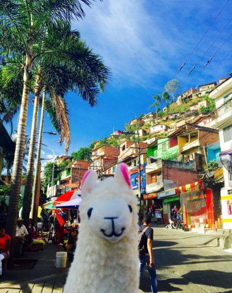 The llama visits Santo Domingo Medellin.