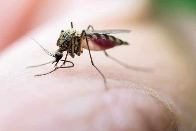 Could scientists wipe out all mosquito-borne diseases in one fell swoop?