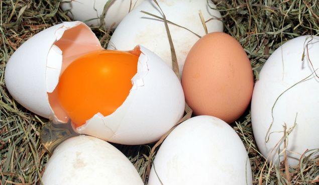 Try pasture-raised eggs instead.
