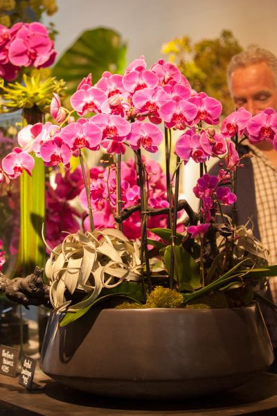 Major orchid moment