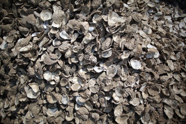 WHITSTABLE, UNITED KINGDOM - AUGUST 03: A pile of oyster shells wait for collection from outside a seafront restaurant on August 3, 2011 in Whitstable, England. Parts of southern England are experiencing high summer temperatures. (Photo by Peter Macdiarmid/Getty Images)
