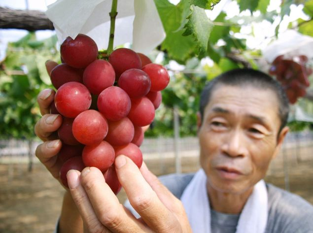 Ruby Roman grapes, the unusually large fruits treasured by Japanese fruit fetishists.