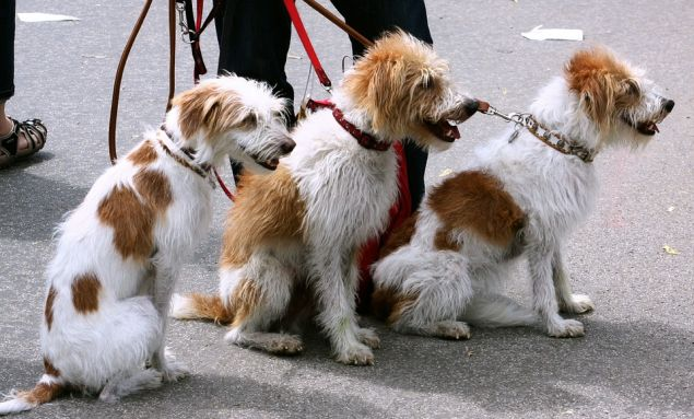 A dog's sense of smell is vastly more developed than a human's.