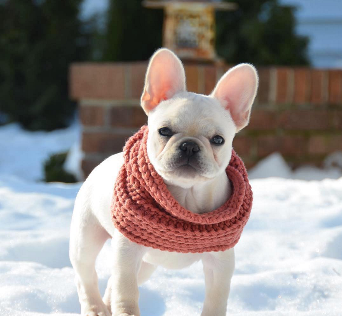 @princesslayla_thefrenchie wearing the Fab Dog Infinity Scarf.
