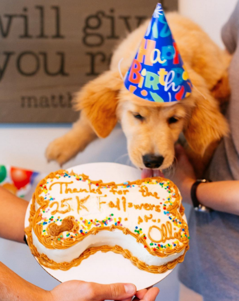 Should dogs have birthday parties when they reach a certain number of Instagram followers?