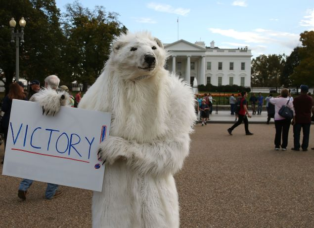 Dressed as a Polar Bear climate control activist Catherine Kilduff from the Center for Biological Diversity holds a victory sign after after President Obama announced that he would reject the Keystone XL Pipeline proposal, at the White House November 6, 2015