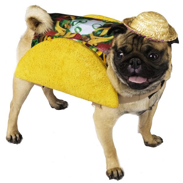 A pug in a taco suit.