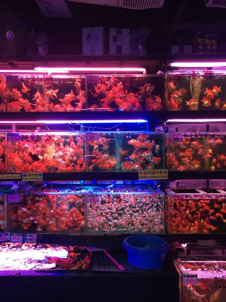 The gold fish market.