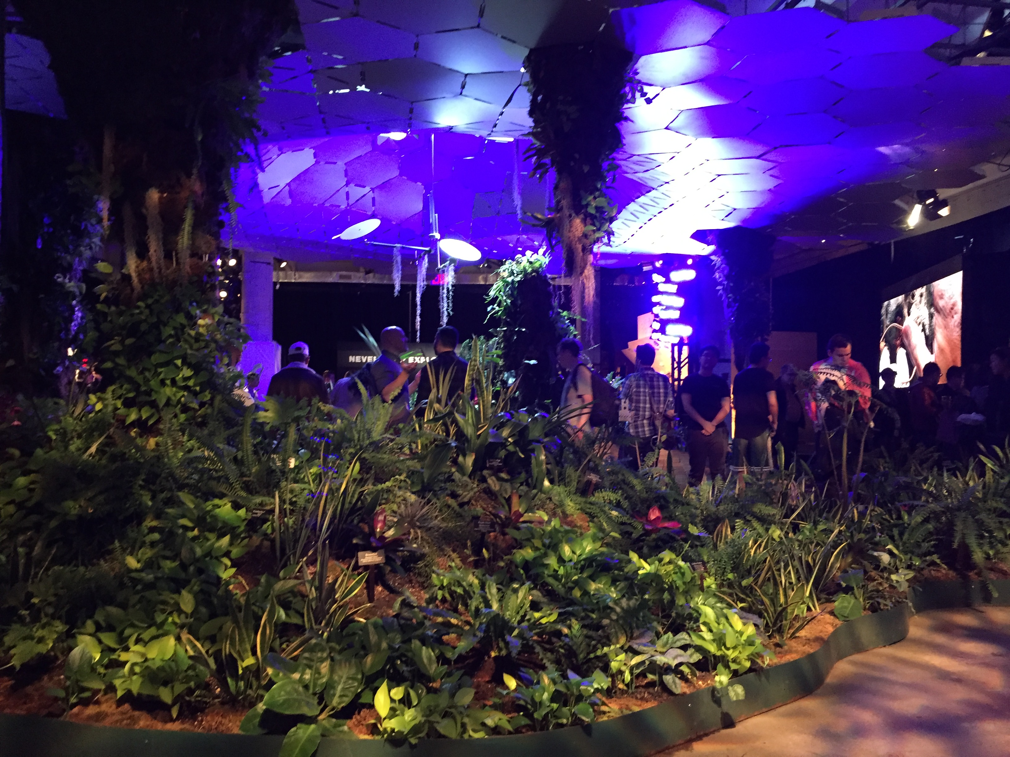 The Lowline Lab displays how plants will thrive underground when the Lowline park opens in the Essex Street subway.