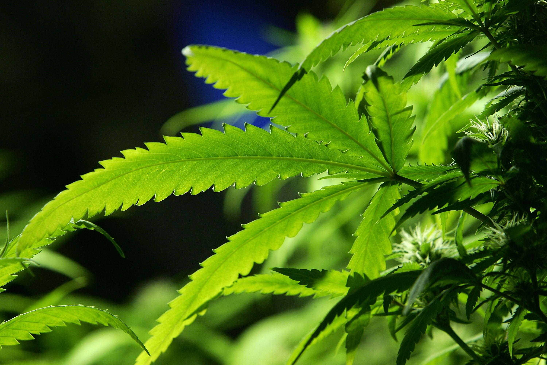 Marijuana's reclassification is inevitable.