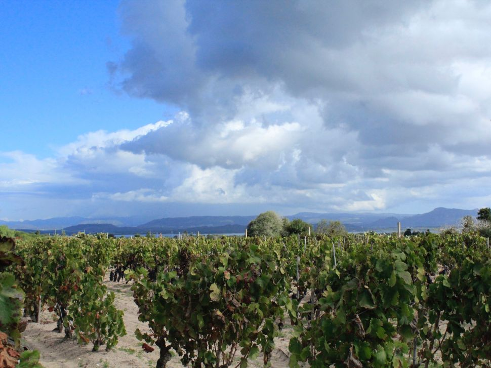 Roberto's vineyard at Sardus Pater.