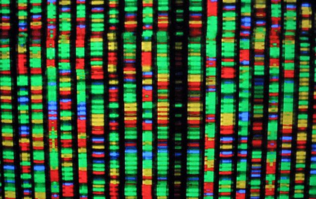 A digital representation of the human genome August 15, 2001 at the American Museum of Natural History in New York City.