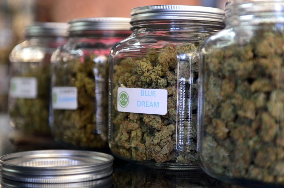 The highly-rated strain of medical marijuana 'Blue Dream' is displayed among others in glass jars at Los Angeles' first-ever cannabis farmer's market at the West Coast Collective medical marijuana dispensary, on the fourth of July, or Independence Day, in Los Angeles, California on July 4, 2014 where organizer's of the 3-day event plan to showcase high quality cannabis from growers and vendors throughout the state. A vendor is seen here responding to questions and offering a whiff of the strain 'Skyjack'. AFP PHOTO/