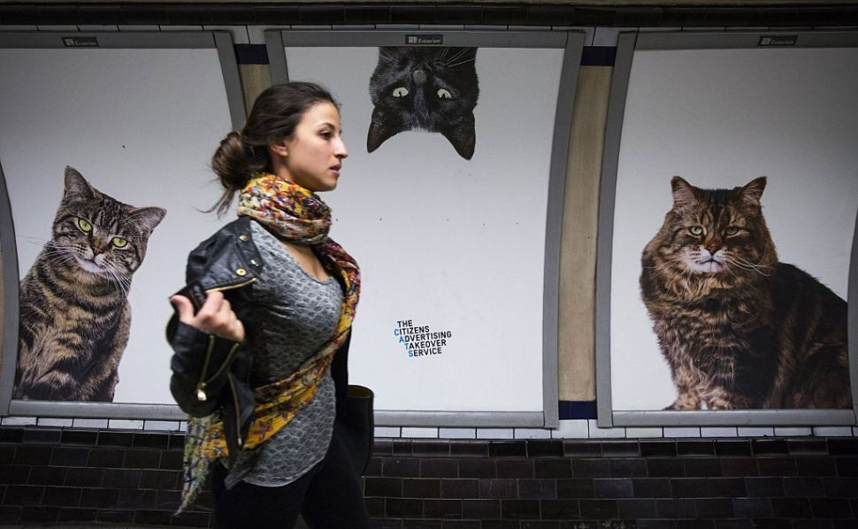 A commuter walks past cat posters at Clapham Common Underground station in south west London on September 16, 2016. Creative collective, Citizens Advertising Takeover Service (CATS), a project started by a group called Glimpse, have replaced many of the adverts in Clapham Common Underground station with posters featuring stray cats from Battersea Dogs & Cats Home and Cats Protection, after raising £23,000 from almost 700 people via crowdfunding website kickstarter. / AFP / Jack TAYLOR (Photo credit should read JACK TAYLOR/AFP/Getty Images)