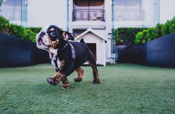 pet friendly hotels hollywood