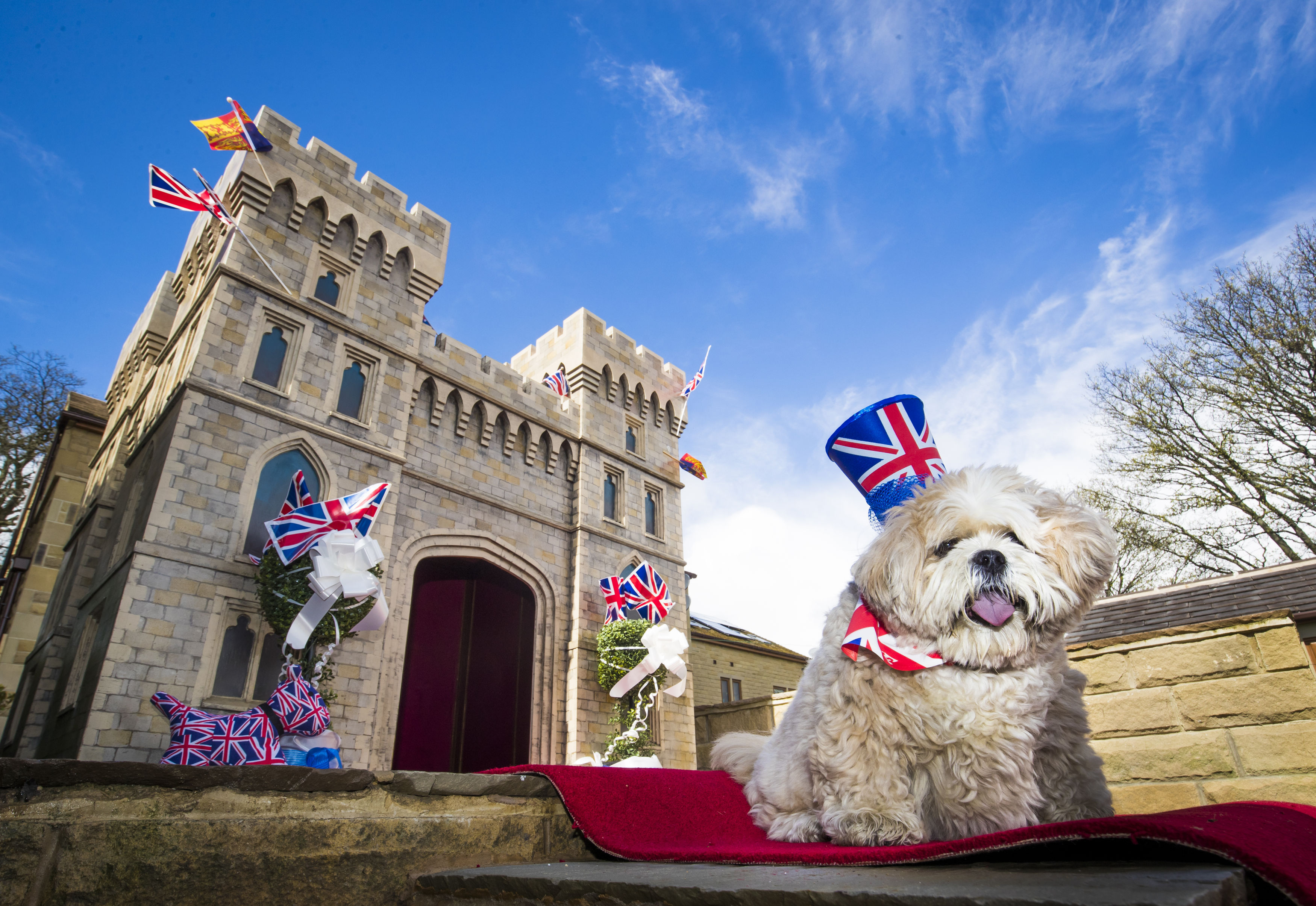 Archie the Lhasa Apso and his new kennel, a replica of Windsor Castle, which his owner Susan Crossland has installed at her home in Mirfield, West Yorkshire.
