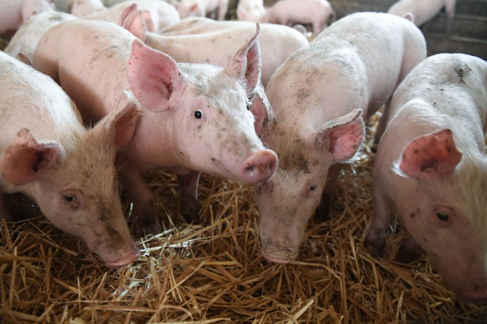 Tariff on U.S. pork is up 50 percent this year.
