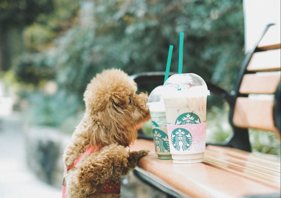 Starbucks will ban plastic straws by 2020.