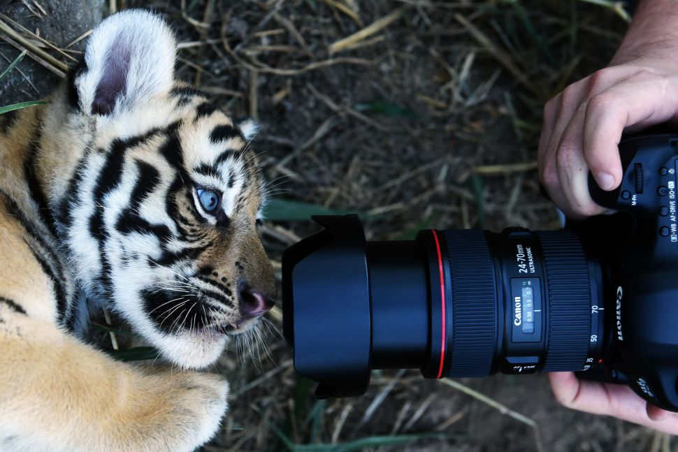 When you get tired of posting brunch shots on Instagram, this tiger cub is ready for his close-up.