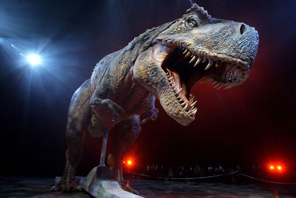 An adult Tyrannosaurs Rex robotic dinosaur.