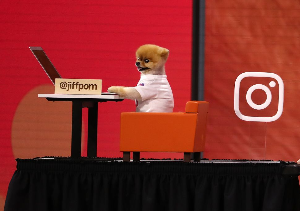 Even dogs are Instagramming now, which is why Merriam-Webster added the verb to its dictionary.