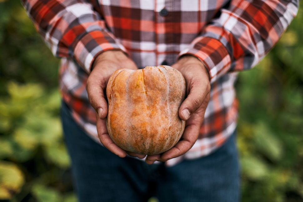 The Robin's Koginut squash, a designer breed developed for Sweetgreen by Dan Barber and Row 7, might be the Yeezy of the vegetable world/fast casual dining