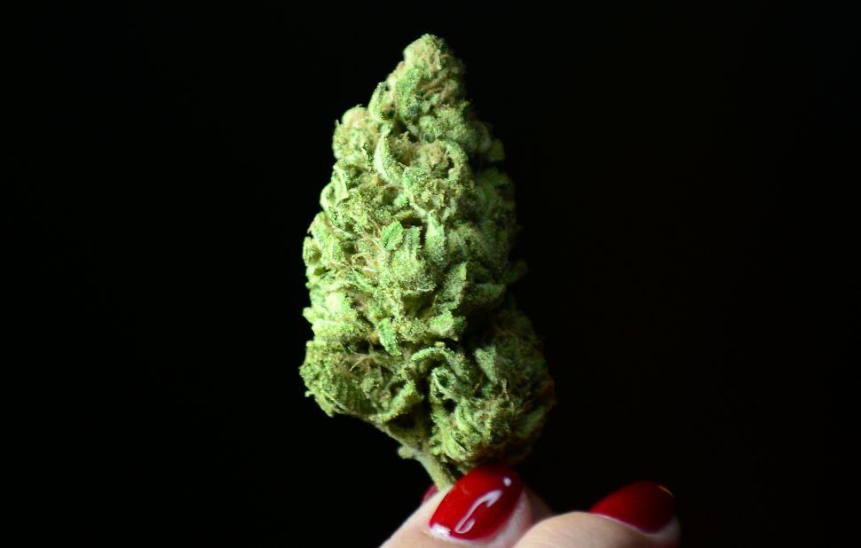 A bud of Maui Afghooey medical marijuana.