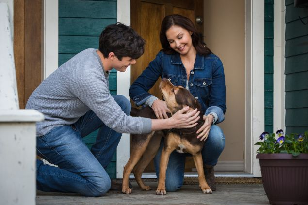 Jonah Hauer King, Shelby the dog and Ashley Judd in A Dog's Way Home.