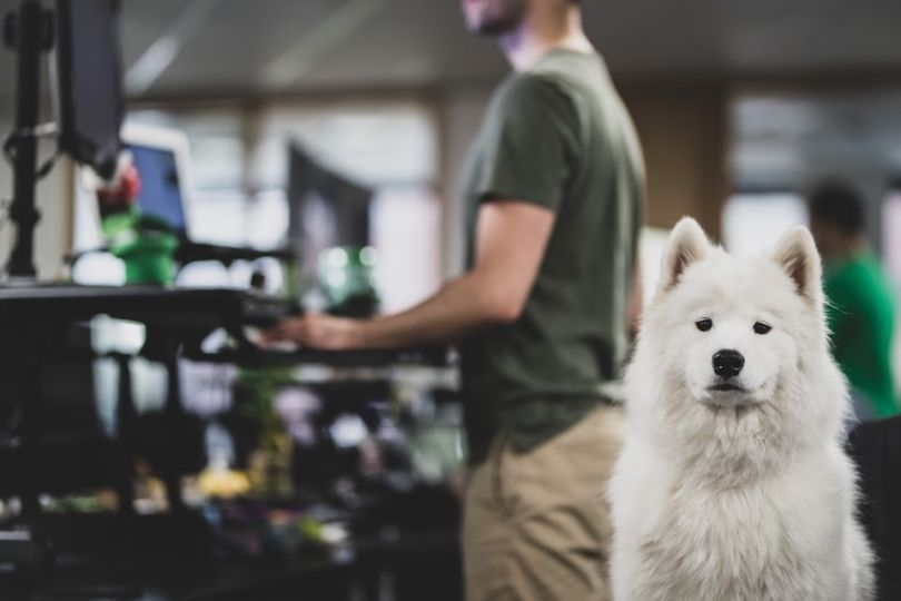 Rover's Seattle office has about 300 employees and 70 dogs on a daily basis.