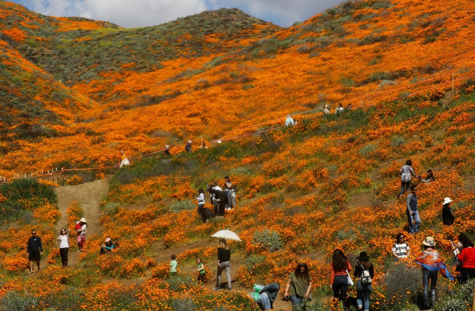 Visitors explore a 'super bloom' of poppies near Lake Elsinore, California.