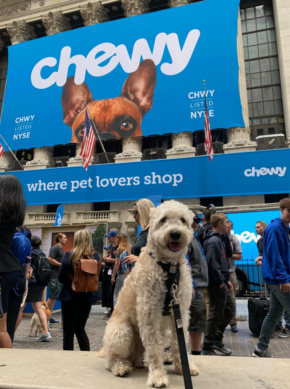 Wheaton Terrier Benji Borden Albanese sits outside the NYSE at Chewy's IPO bell ringing.