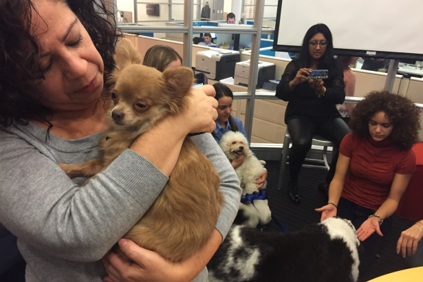 Outbrain puppy perks