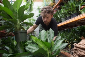 Matt Schechter gets an order ready in the Interior Foliage Design greenhouse in Long Island City, Queens.- Photo by Aaron Adler for The Commercial Observer